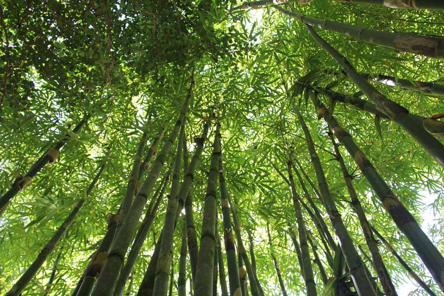 Motivational Story The bamboo Tree